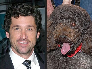Costar Puts Patrick Dempsey in the Doghouse