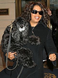 TV News Roundup: Oprah Remembers Her Beloved CockerSpaniel