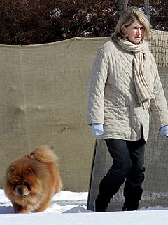Martha Stewart's Dog Killed in Explosion