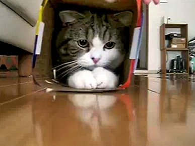 Fat Cat Squeezes into a Small Box