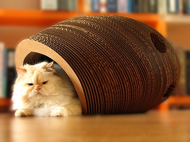 The Cat Cacoon: A Toy For Them, Art For You