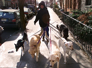 Got Laid Off? How 'Bout New Career as Dog Walker?
