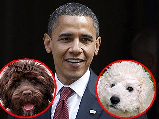 Poll: What Kind of Dog Should the Obamas Get?