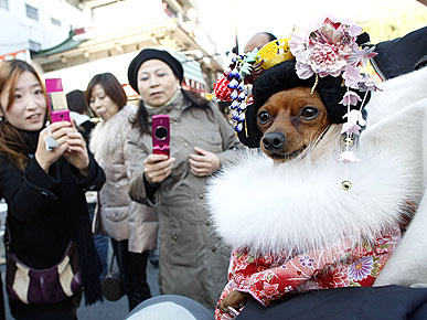Holy Kimono! Japanese Dog Dresses Up for New Year's