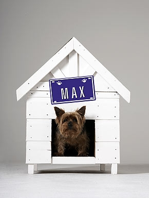 Knowa Dog Named Max? Most Popular Pet Names Revealed!