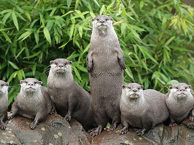These Otters Say: Count Me In!