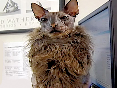 Tell Us! Is This the Ugliest Cat You&#39;ve Ever Seen?