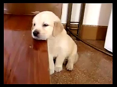Thursday's Funny Pet Video: Sleepy Puppy