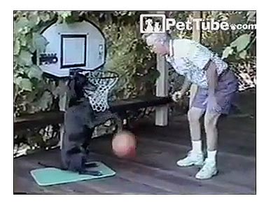 Wednesday's Funny Pet Video: Zeke the Dog Can Dribble!