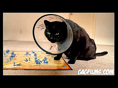 Friday's Funny Pet Video: Kitty Plays a Board Game!