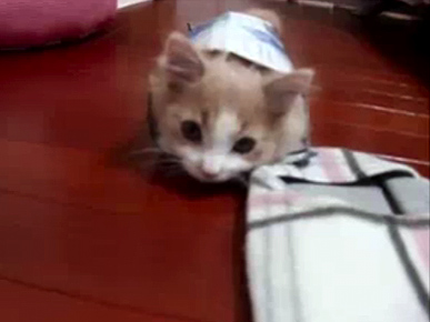 Monday's Funny Pet Video: Kitty vs. Kleenex!