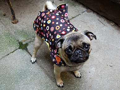 Broken Umbrellas Become Adorable Dog Coats