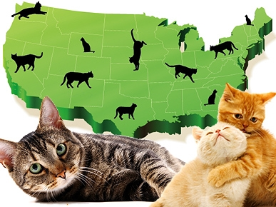 Top 10 Cat-Friendly Cities: Is Yours on the List?