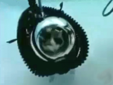Monday's Funny Video: Scuba-Diving Dog and Cat