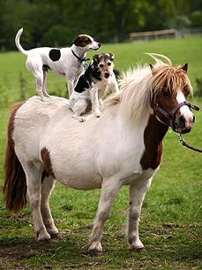 Giddy Up! Dogs Who Are Pony Ride Pros