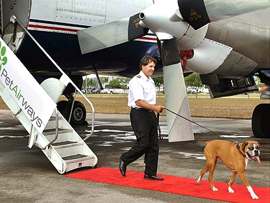 Welcome Aboard! PetAirways Make Dogs and Cats Traveling VIPs