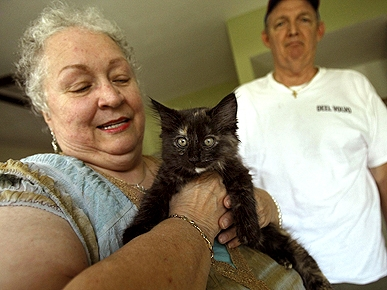 New Kitten Helps Florida Couple Cope After 'Cat Butcher'