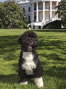 Puppy Up! Download the Official Bo Obama Baseball Card