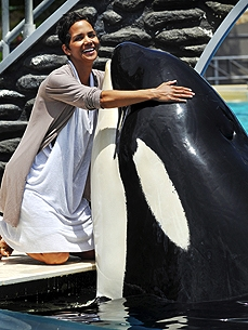 Spotted: Halle Berry Gives Shamu a Whale of a Hug at SeaWorld