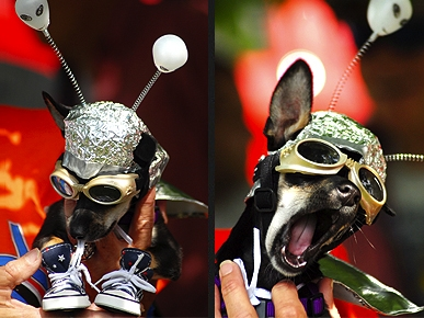 They Come in Peace: Dogs Dressed As Aliens!
