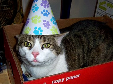 Tell Us: How Do You Celebrate Pet Birthdays?