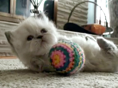 Thursday's Funny Video: Someone Help This Fluffball Kitten Up!
