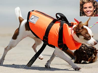 Get the Look: AnnaLynne McCord's Pet Life Vest
