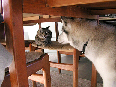 Caption Contest: What's Lucy the Cat Saying to Lakota the Dog?