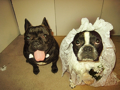 Caption Contest: What Are This Barking Bride and Groom Saying?