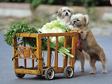 Barking Bargain Shoppers! Dogs Trained to Push a Grocery Cart
