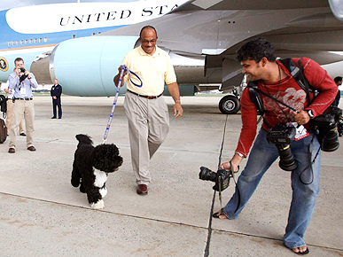 He'll Always Have the Memories! Bo Obama Returns to Work