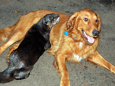 Otter and Dog Love!  These Unlikely Pals Play Together by the Water