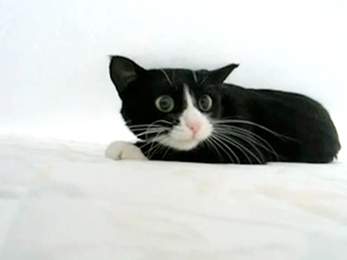 Monday&#39;s Funny Video: Bed Sheet-Obsessed Cat