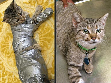 Sticky Situation: Kitty OK After Being Wrapped in Duct Tape