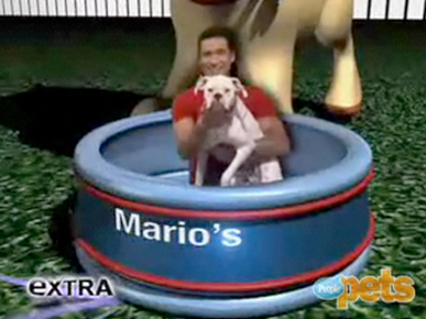 Sneak Peek: Mario Shows Us Picture-Perfect Pooches!