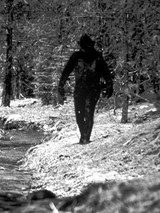 Do You Believe in Bigfoot? One-Third of Americans Do!