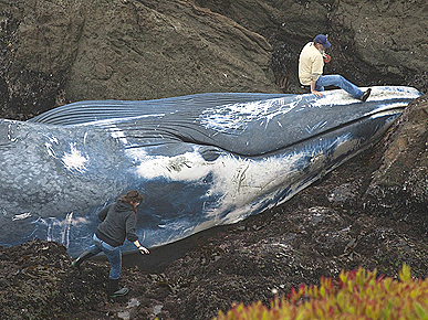 The Water Bowl: Blue Whale Washes Ashore in California; Plus, Why Do Dog&#39;s Feet Smell?