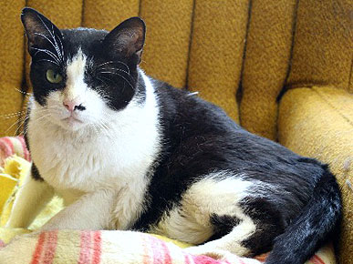 Success! Marvin the One-Eyed Cat Finds a Forever Home