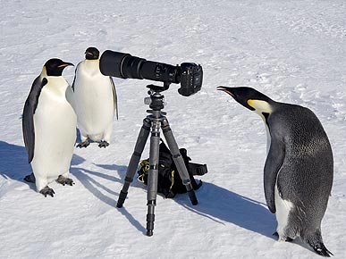 PHOTO: Antarctica's Next Top Models? Penguins!