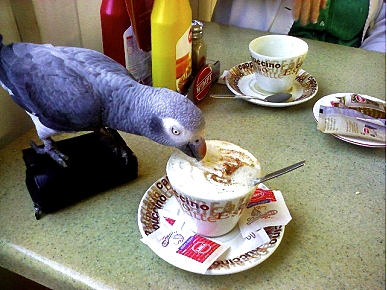 Animal 'D'Oh!': Harry the Parrot Likes His Coffee Light and Sweet