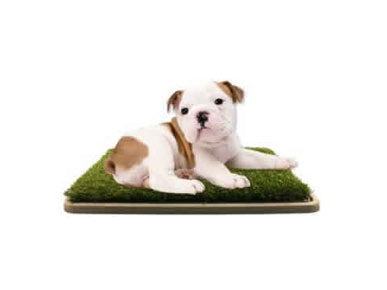 REVIEW: You'll Have to Persuade Your Pooch to Use This Patch of Grass