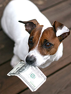 Petiquette: How Much Should You Tip Your Dog Walker This Holiday?