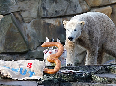 PHOTO: Knut the Polar Bear Turns 3!