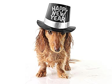 LAST CHANCE: Tell Us Your Pet's New Year's Resolution and Help Your Favorite Shelter!