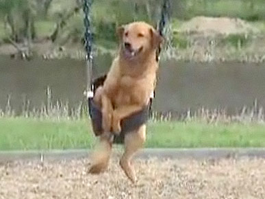 Friday&#39;s Funny Video: Dogs Rides Playground Swing!