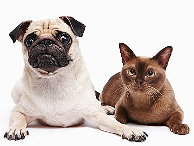 Buddy and Lucy Among the Most Popular Adopted Pet Names of 2009