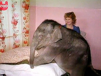Tuesday&#39;s Funny Video: Baby Elephant Spends Christmas with Humans