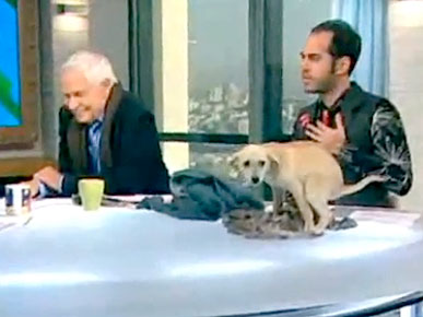 Wednesday&#39;s Funny Video: Puppy Goes Potty During Live News Segment!