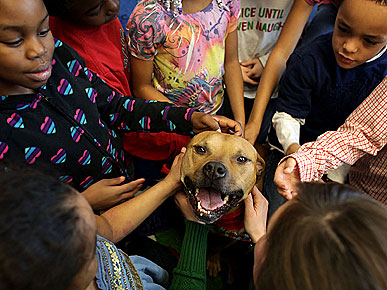 Former Michael Vick Pit Bull Enjoying New Life As Therapy Dog