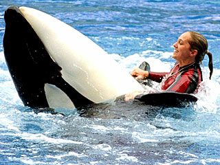 Killer Whale Shows to Resume Saturday